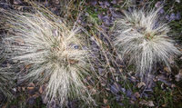 Grass in December