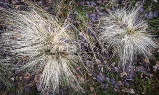 Gras im Dezember