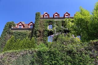 Altes Gefängnis in Rothenburg hinter Efeu