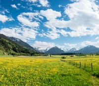 Yellow flower meadow with snow covered mountains and traditional wooden barns. Bavaria, Alps, Allgau, Germany.