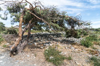 Prehistoric mound graves in The hills near Larvik