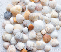 Shells on a light background . Article about vacation. Sea shells lie on a light background