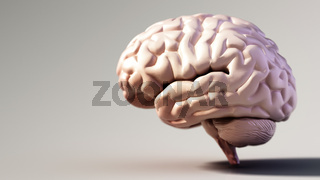 Human brain standing on soft color background. Copy space on the left. 3D illustration