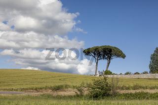 Landschaft mit Pinien bei Vinci, Toskana, Italien
