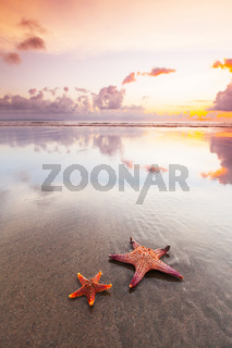 Two starfish on sea beach