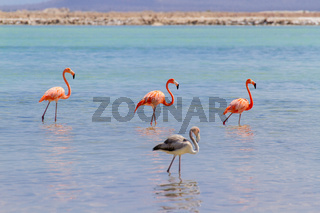 Group of red flamingos in lake on coast