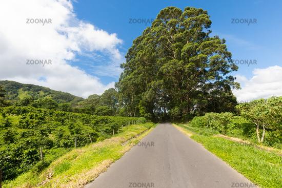 Costa Rica coffee plantations road