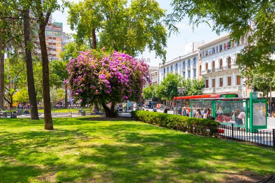 Argentina Cordoba flowering tree in San Martin park