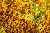Dallol landscape close up, Danakil desert, Ethiopia