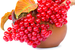 Berries of viburnum and yellow leaves in a ceramic vase on a white background.