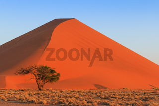 Spectacular red dune of always shifting sand. At sunset Sossusvlei