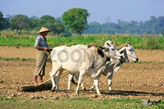 Local man working on a farm field, Amarapura, Myanmar