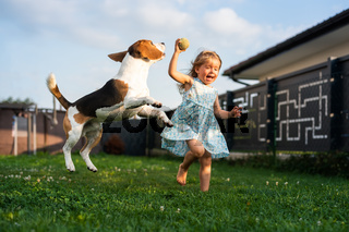 Adorable baby girl runs together with beagle dog in backyard on summer day.