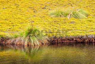 King Billy Track - Cradle Mountain