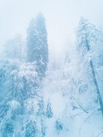 Winter mountain forest in frost