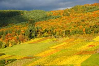 Wald und Weinberge im Herbst