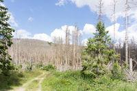 Forest declain