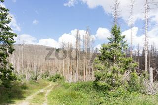 Waldsterben im Oberharz