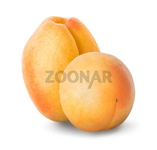 Two ripe apricots