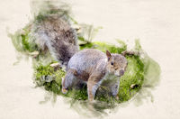 Watercolor grey squirrel