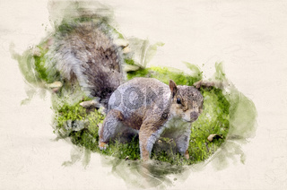 Watercolor grey squirrel
