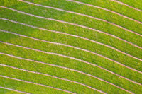 Background of mowed dry hay on green meadow from directly above