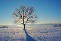 Winter morning mood with tree