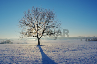 Winterliche Morgenstimmung mit Baum