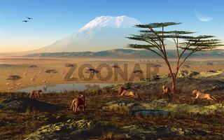 Sonnenaufgang  in Afrika