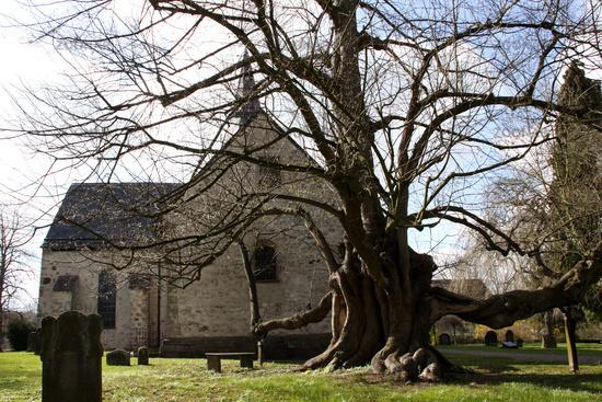 Church lime in Reelkirchen