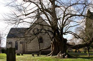 Kirch-Linde in Reelkirchen