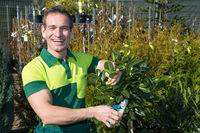 Gardener pruning a tree or plant at nursery