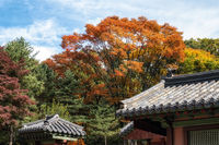 Autumn foliage in Jongmyo shrine
