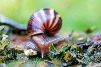 African snail - madagascar. Africa wildlife