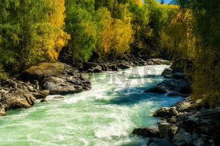 mountain river flows over the rocks. The rivers are altai. Nature is altai.