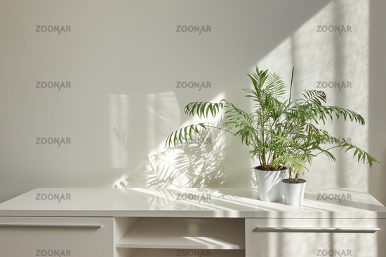 Stylish interior desk with green houseplants and shadows on the wall.