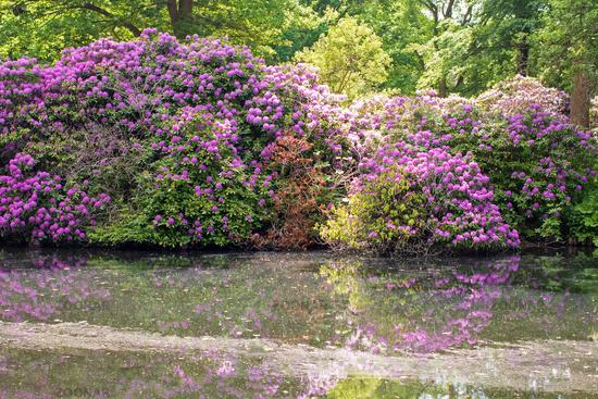 Tiergarten 021. Germany