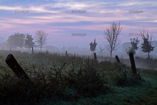 Daybreak in a Brandenburg marshland, Germany