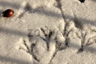 Fußspuren von Vögeln im Schnee