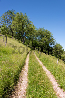 Hiking trails in the landscape by Muenstertal