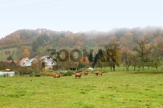 misty autumn scenery