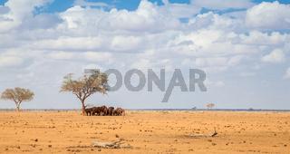A lot of elephants standing under a big tree, on safari in Kenya