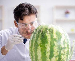 Scientist testing watermelon in lab