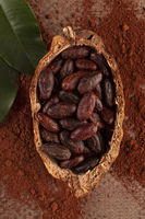 Fresh roasted cocoa beans and powder on brown background.