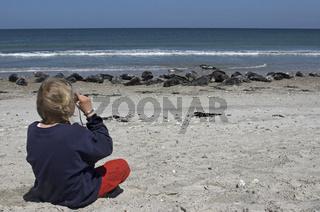 Robben-am-Strand