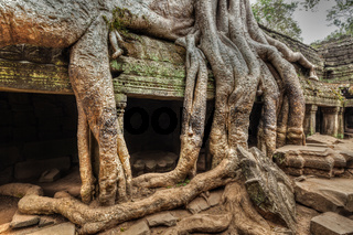 High dynamic range (hdr) image of ancient ruins with tree roots