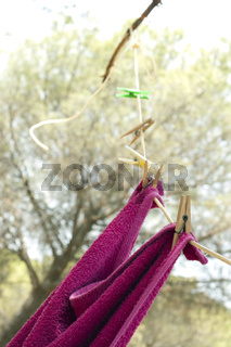 Clothes dryer on tree branch