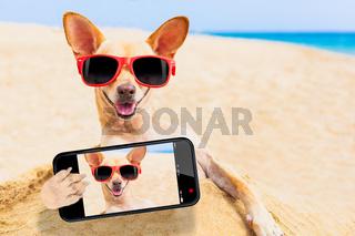 chihuahua dog selfie