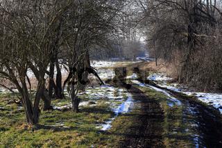 Winterlandschaft mit Hecken in Bayern