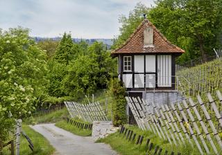 Weinberg bei Schaffhausen